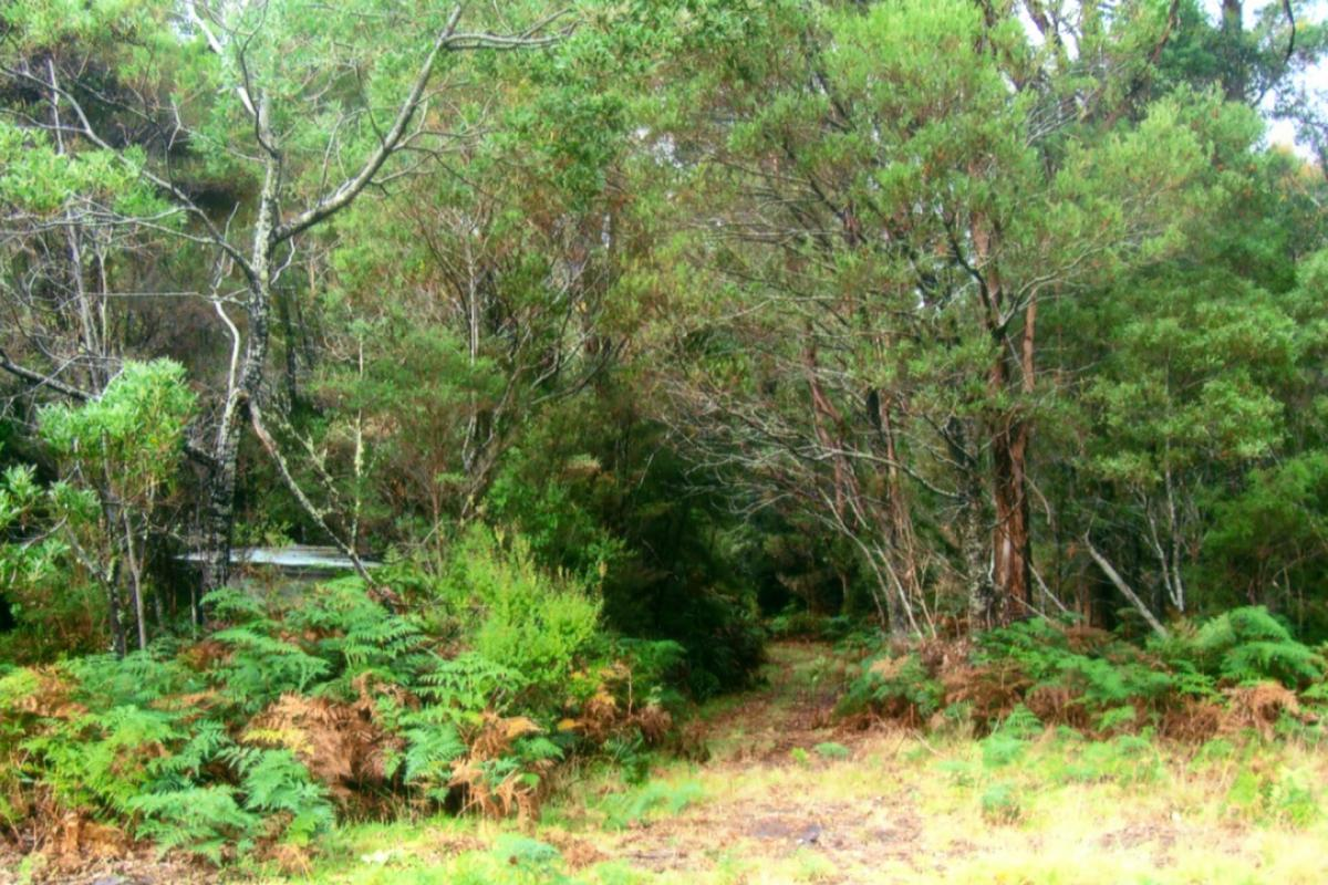 wlt-tas-whitewallabywalk02.jpg