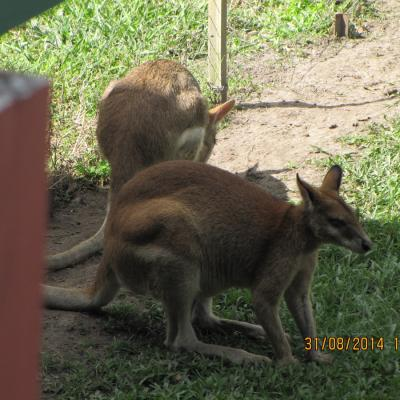 Wallaby Downs