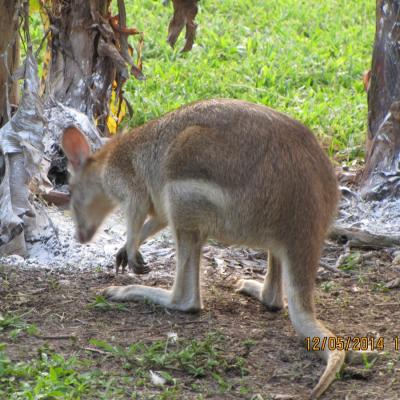 wlt-qld-wallabydowns03.jpg