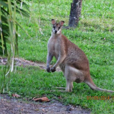 wlt-qld-wallabydowns05.jpg