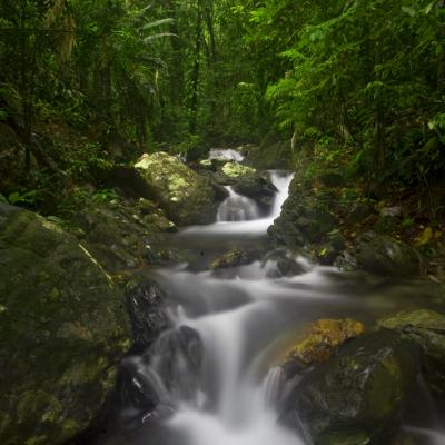 Daintree Rainforest Wildlife Sanctuary