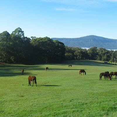 Kangaroo Valley Horse Riding