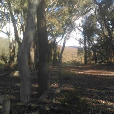 wlt-nsw-willabyours02.jpg